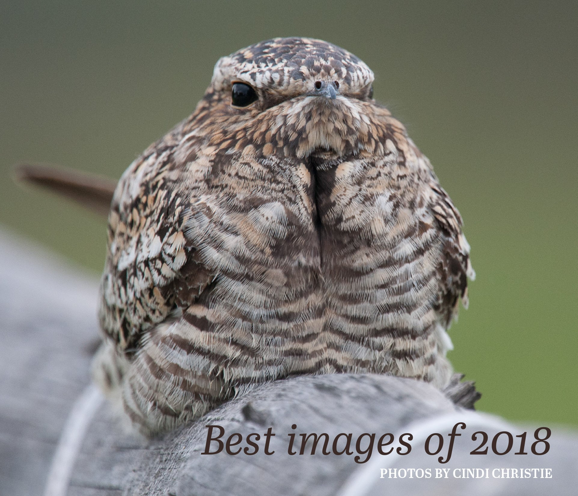 Best images of 2018 cover photo