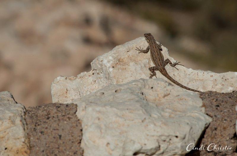 20111017-arizona-01