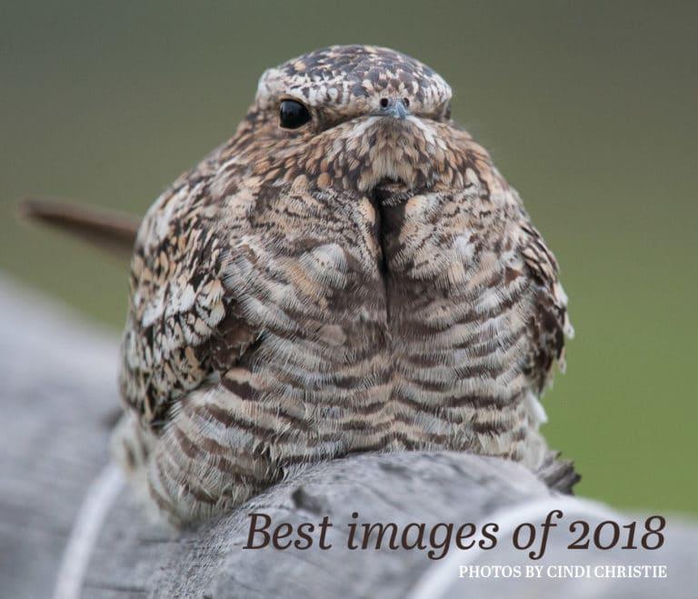 Best of 2018 photo e-book