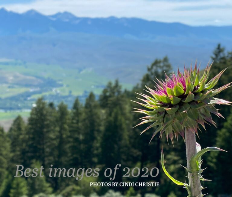 Best of 2020 photo e-book