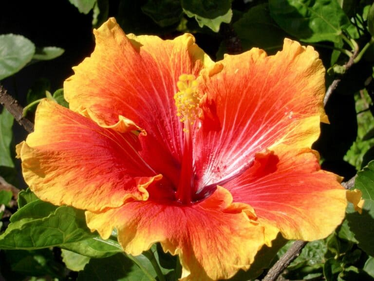 Hawaii in bloom